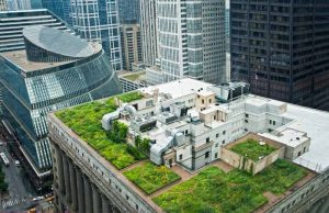 Chicago City Hall rooftop garden as seen from above