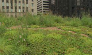 Episode 122 – Green Roofs & Rooftop Gardens