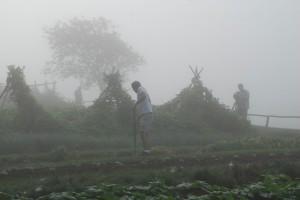 Thomas Jefferson's garden in the fog