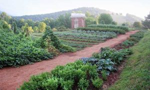 Monticello vegetable garden with fog lifiting