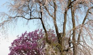 Tree Topping – What You Don't Know is Killing Your Trees