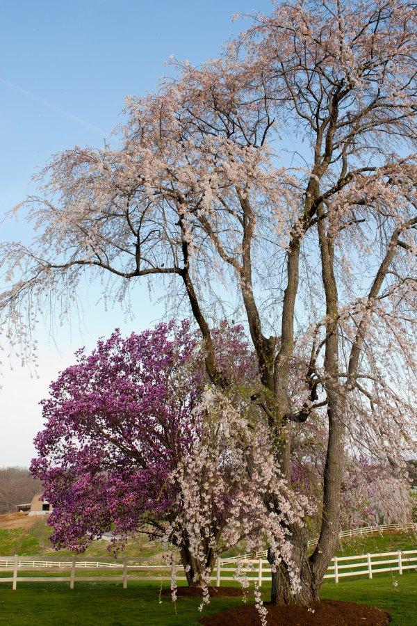 Spring jclow