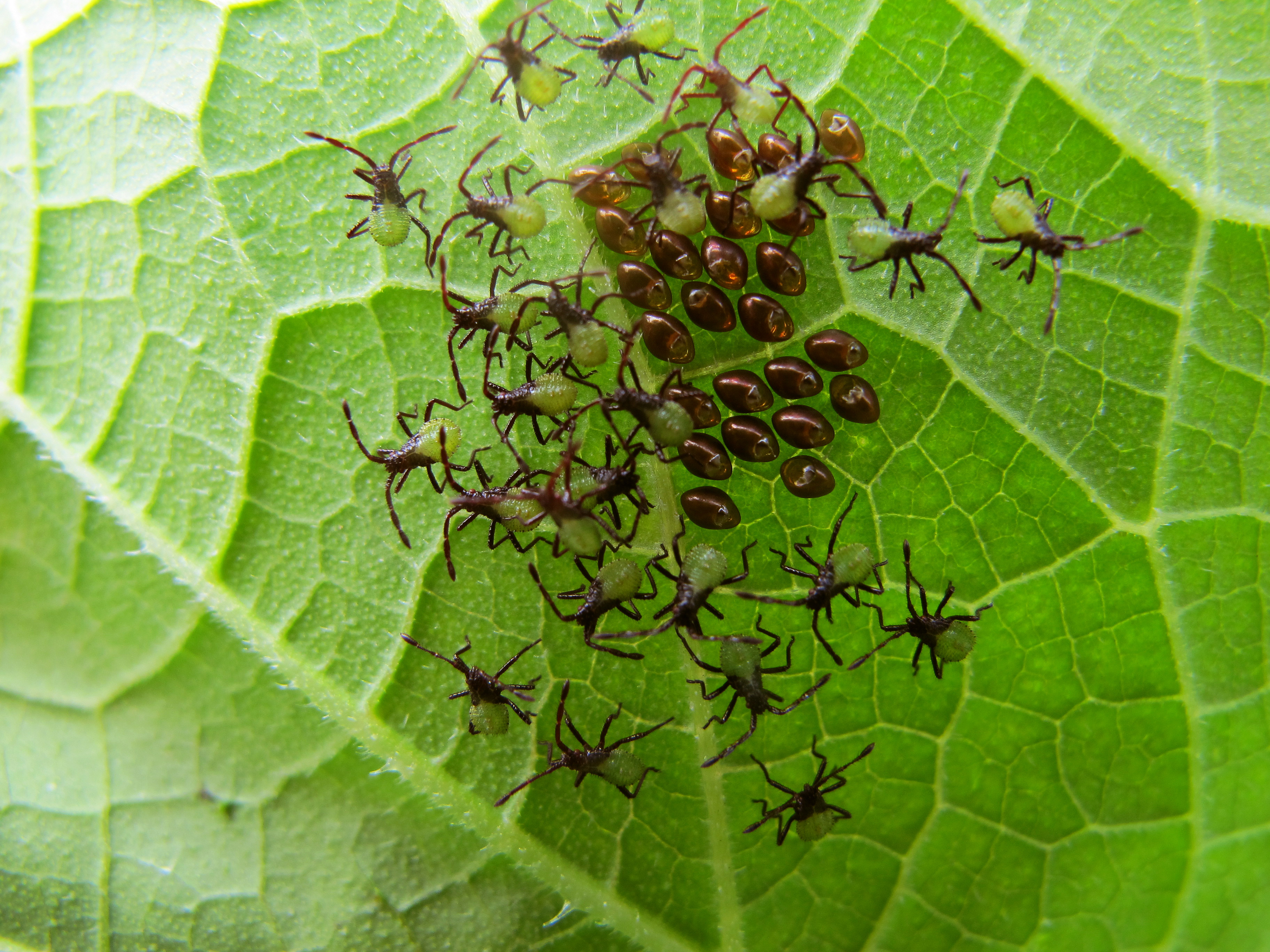BHG019-Proactive Tips for Pest Control