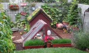 Theresa Loe's city homestead includes backyard chickens