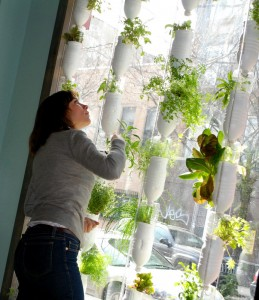 Britta Riley and her vertical hydroponics system