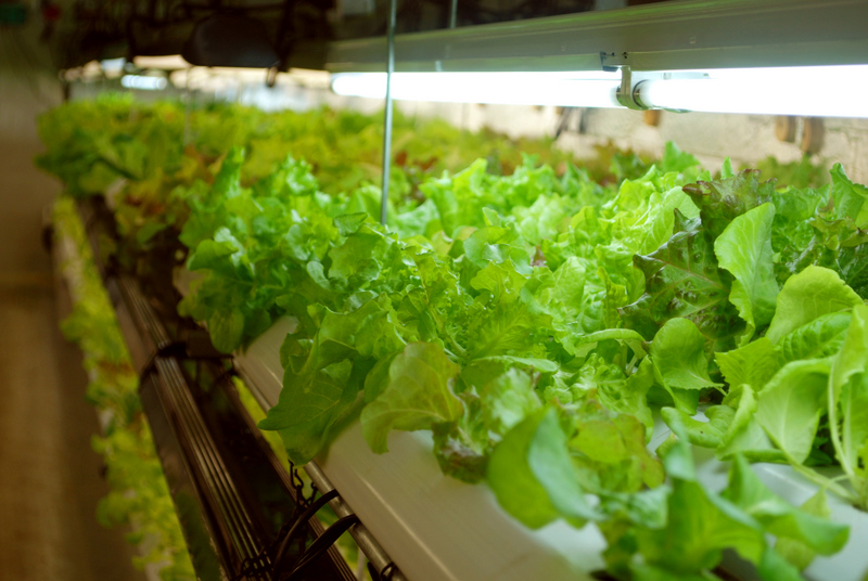 Episode 206 hydroponics growing a greener world - Hydroponic container gardening ...