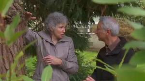 Dr. Linda Chalker-Scott shows Joe tree damage from staking