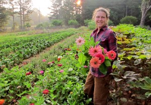 The zinnia harvest at Serenbe Farms