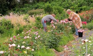 Scenes from an organic flower farm