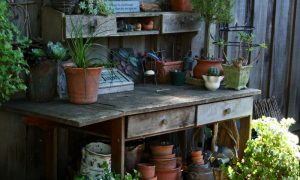 Episode 323: Small Space Gardening