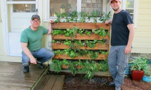 The Accidental Pallet Garden – Oh Yeah!