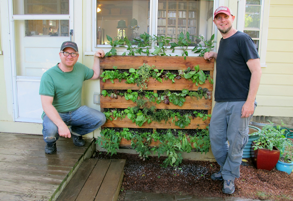 The accidental pallet garden oh yeah growing a for How to make a vertical garden using pallets