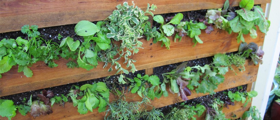 Creating A Pallet Garden Step By Step Instructions Growing A