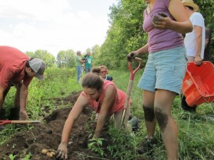 Harvesting potatoes with the other students at The Farm School