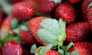 HGT021-How do I Grow THAT: Strawberries