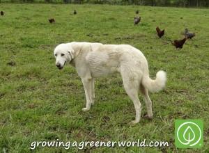 Farm dog Michael was our constant companion