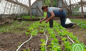 Polyface Farm: 3 Hours of Rain, 2 Days of Filming and 1 Farmer Making a Difference