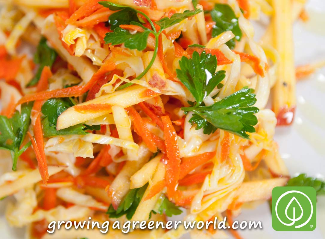 Salad from cabbage, carrots and apples