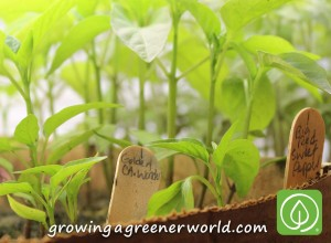 Starting your garden from seed can add a whole new experience to growing your own food, flowers - even houseplants!
