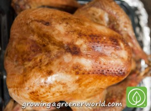 Whole Roasted Brined Turkey on Growing a Greener World