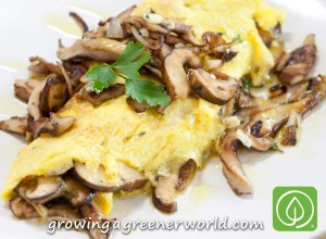 Shiitake Mushroom Omelet
