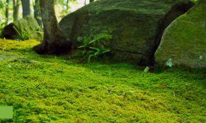 Episode 319: Moss Gardens