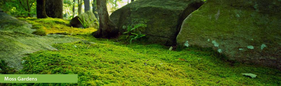 Episode 319 Moss Gardens Growing A Greener World 174
