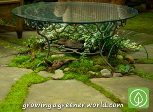 Vibrant Moss Garden grows beneath glass table and between stepping stones