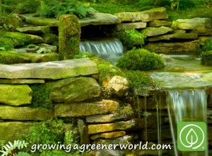 Moss Gardens and Waterfall Feature