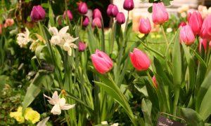 Episode 320: Northwest Flower and Garden Show