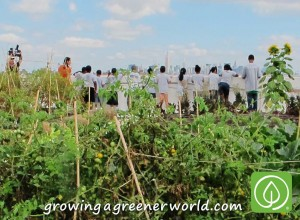 Admiring the NYC skyline view from Brooklyn Grange, Rooftop Farm