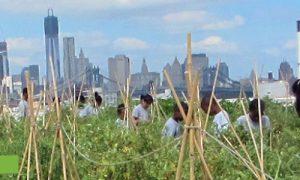 Episode 409 – Rooftop Farm
