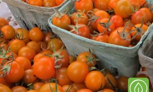 HGT022-How do I Grow THAT: Tomatoes