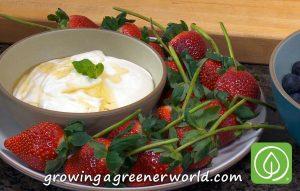 Fresh Fruit with Honey Vanilla Whipped Ricotta