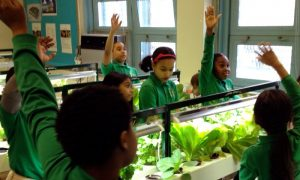 Power of Classroom Garden