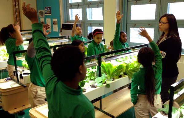 Some NYC schools convert old classrooms into hydroponic farms