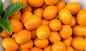 Kumquat Marmalade and Canning Tips
