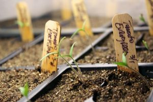 Starting plants from seed has many benefits