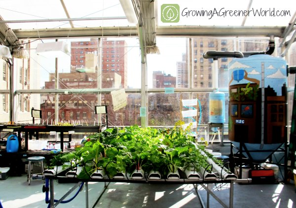 Even without land, schools can use a garden setting as a classroom.
