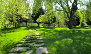 Organic and Natural Lawn Care Solutions