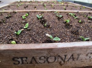 You have so many more plant choices when you grow from seed