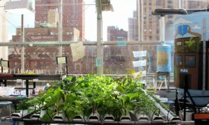 Episode 401: NY Greenhouse Classroom
