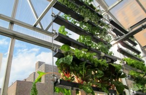 The rooftop greenhouse classrooms uses every inch of available space