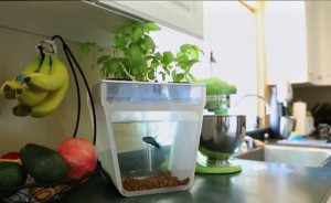 Tabletop Aquaponics from Back to the Roots