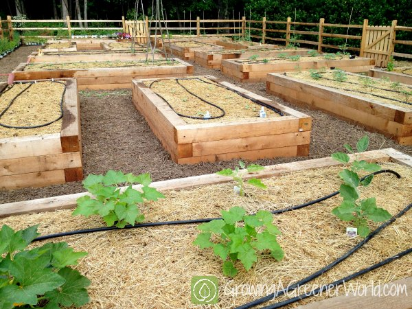 Episode 406 Setting Up A Garden Growing A Greener World