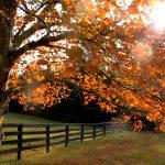 Tree Care - Fall