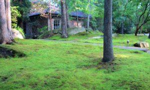 Episode 411 – Moss Gardens