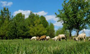 Episode 407 – Organic Lawn Care