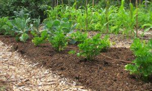 Weed Free Gardening