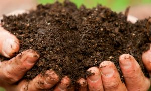 Episode 417: The Dirt on Healthy Soil
